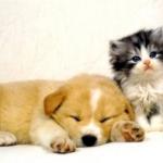 cica-kutya-7.jpg