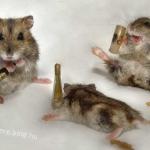 piás egerek.jpg