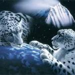 tigris3.jpg