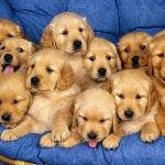 Dogs-dogs-16697078-1600-1200.jpg