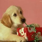 Dog-dogs-16457321-772-579.jpg