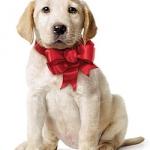 dogs-dogz-16310225-250-347.jpg