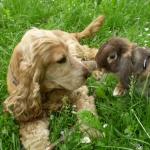 kutyám és a nyuszi