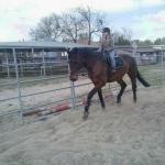 Én és Royal a lovardában