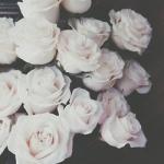 tumblr_n5cmggI9zs1t2463ro1_250.jpg