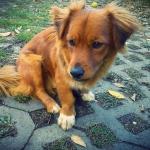 My doggy