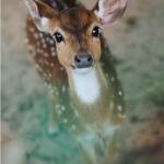 animal-fawn-forest-little-Favim.com-1790809.jpg