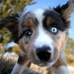 animal-cute-dog-eyes-Favim.com-813037.jpg
