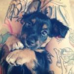 cute-dog-mixel-wallpaper-10.jpg