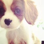 baby-beautiful-cute-dog-Favim.com-886805.jpg