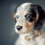 adorable-cute-dog-puppy-Favim.com-415578_large.jpg