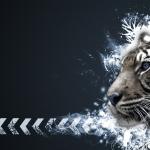 tigris.jpg