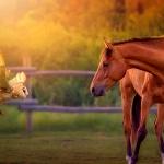 ló barátság.jpg