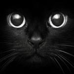 Fekete cicus.jpg