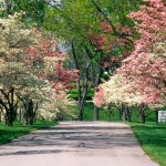 Beautiful_Spring-wallpaper-4763791.jpg