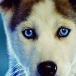 Cute_Doggy-wallpaper-8564542.jpg