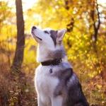 White_Dog-wallpaper-9728538.jpg
