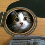 Cat in the guitar