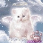 c__data_users_defapps_appdata_internetexplorer_temp_saved_images_angel_kitty.jpg