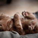 animal-aww-baby-bed-cat-cute-Favim.com-84110.jpg