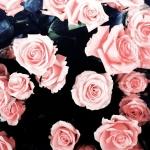 Rózsaaa *-*