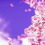tavasz01.jpg