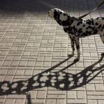 Foltos kutya foltos árnyék.jpg