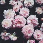 P!nk virág.jpg