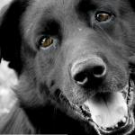 A legintelligensebb élőlény akit ismerek: Bagira kutyám:x